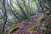 (RicardoPestana2012) Tags: forest fog mist scary moody eerie madeira madeiraisland laurissilva trail path trekking vereda