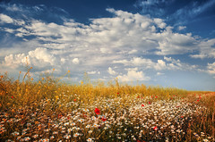 Summer (Pásztor András) Tags: nature summer clouds sky field meadow poppy white blue red serenity calmness mood d5100 dslr nikon andras pasztor photography 2018