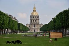 Look, Organic Lawnmowers! (Eddie C3) Tags: parisfrance lesinvalides lawns sheep urbanparks avenuedebreteuil