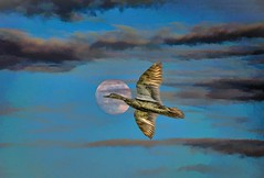 Flying to the Moon (Rusty Russ) Tags: fly moon bird cloud enhance sky blue colorful day digital window flickr country bright happy colour eos scenic america world sunset beach water red nature white tree green art light sun park landscape summer city yellow people old new photoshop google bing yahoo stumbleupon getty national geographic creative composite manipulation hue pinterest blog twitter comons wiki pixel artistic topaz filter on1 sunshine image reddit tinder