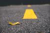 Spring road (Pablouno) Tags: yellow road way urban ground asphalt via leaf hoja