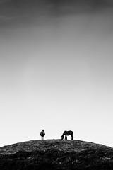 Cabalos no monte Iroite (Feans) Tags: sony a7r ii a7rii fe 100400 gm cabalo salvaxe raza galega pura wild horse serra barbanza monte iroite galiza galicia