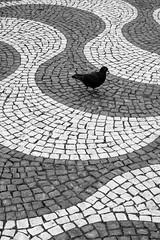 The rossio effect (The Green Album) Tags: bird pavement ripples design cobbles rossio square lisbon portugal fujifilm xt2