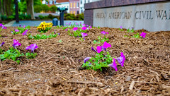 2018.05.06 Vermont Avenue, NW Garden - Work Party, Washington, DC USA 01871