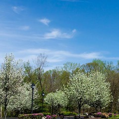 Spring has sprung #carries_captures3 #flower #newengland #connecticut #carriesphotos #trees #notsnow #bluesky #photooftheday #newenglandphotography #naturalnewengland #getoutside #scenesofnewengland #connecticutgram #flowergram #bloom #blooming #flowergra (auntcarri) Tags: ifttt instagram spring has sprung carriescaptures3 flower newengland connecticut carriesphotos trees notsnow bluesky photooftheday newenglandphotography naturalnewengland getoutside scenesofnewengland connecticutgram flowergram bloom blooming flowerlovers petals floral visionandedits floweringtrees sky