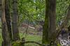 rondje-awd-april2018-14 (voorhammr) Tags: 2018 aalscholver alexandro amsterdamsewaterleidingduinen eend herten kuifeend paard reiger zwaan aerdenhout noordholland nederland nl