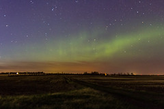 Night sky and country road (begineerphotos) Tags: auroraborealis star stars field road country countryroad night sky nightsky northernlights alberta