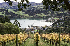 *** (slava eremin) Tags: akaroa nz newzealand winery bay