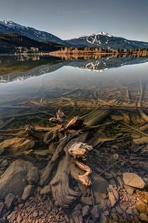 Green Lake Ironwood