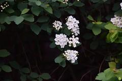 Bunch of flowers (petrOlly) Tags: europe europa germany deutschland moenchengladbach nature natura przyroda plants plant flower flowers