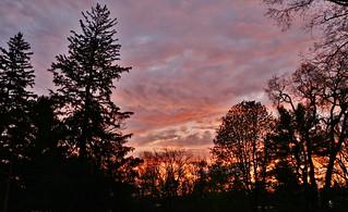 Woodland sunset (Explored-so many thanks!)