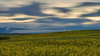 Nubes y Colza - Clouds & rapeseed (teredura58) Tags: colza nubes amanecer alavavision rapeseed clouds sunrise