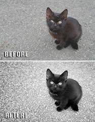 Before After - Black Cat - Ben Heine Photography (Ben Heine) Tags: cat blackcat beforeafter benheinephotography photography nature landscape before after photoediting editing retouching photoretouching objectremoval colorcorrection photocorrection composition restoration photorestoration masking clippingpath clipping mattepainting retouche retouchephoto photographie foto fotografie blacky