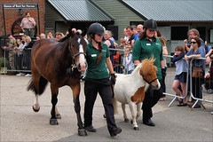 Teddy and Hamish on Parade (meniscuslens) Tags: horse trust horses hounds heroes parade rescue charity shetland pony ponies crowd high wycombe aylesbury princes risborough buckinghamshire