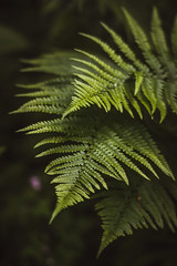Fern (tehroester) Tags: macro sony a7 canon fd 135mm bokeh green tones black forest nature plants sharp shapes focus manual vintage glass