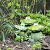 Three Of A Kind (happad fotografie) Tags: green plants backyard ornament frogs toads kikkers nikon nkkor d610 groen planten nature