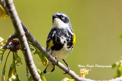 IMG_6433 (nitinpatel2) Tags: bird nature nitinpatel