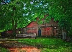 The old milk barn..... (Sherrianne100) Tags: nursery rustic rural repurposed dilapidated milkingbarn oldbarn barn springfieldmissouri missouri