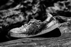 Old shoe (begineerphotos) Tags: shoe log blackandwhite bw moss oldshoe abandoned 15challengeswinner friendlychallenges