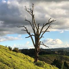 Hull Rd #paperroad #tree (brown.max51) Tags: ifttt instagram
