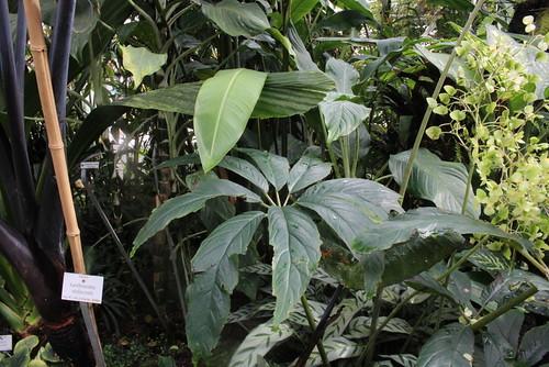 botanischer garten nymphenburg münchen