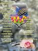 🌸Buongiorno 🌸 (Poetyca) Tags: featured image immagini e poesie sfumature poetiche poesia
