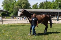 A7302121_s (AndiP66) Tags: vereinsspringen springen sursee 2018 29april2018 april pferd horse schweiz switzerland kantonluzern cantonlucerne concours wettbewerb horsejumping equestrian sports springreiten pferdespringen pferdesport sport sony sonyalpha 7markiii 7iii 7m3 a7iii alpha ilce7m3 sonyzeisstfe35mmf28za zeissfe35mmf28 zeiss fe 35mm f28 sel35f28z andreaspeters