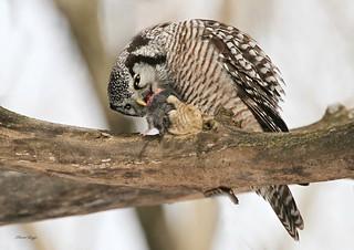 A Snack Attack!!