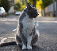 Black and White Cat / happy (I-Like-My-Fotos-RAW) Tags: deutschland germany 50mm springtime spring frühling 2018 mai eos200d canon face strase streat digital wall portrait animals tiere tier animal natur nature bokeh katze schwarz weis cat white black f32 1250 iso100 cars autos trees bäume tree baum green grün colores farben happy smile