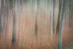 Ghost Trees (Explored) (lclower19) Tags: icm intentionalcameramovement trees explored odt dance