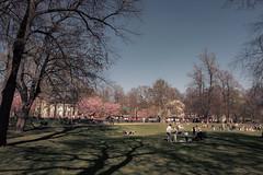 Lazy day (kaffealskare) Tags: fotosöndag fotosondag temafotografering themephotography temabild vila rest fs180506 humlegården park spring cherryblossom shadows shadowplay skuggspel