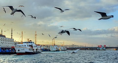 steamboats,seagulls and minarets signs of istanbul (meren34) Tags: istanbul seagull ship sea mosque bridge city turkey