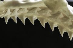 Shark Teeth (Jack Heald) Tags: hmm jack heald jagged sharkjaws teeth shark sharp jaws macro mondays micro 60mm nikon