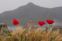 Methoni castle (Chris Juden) Tags: greece peloponnese cycling methoni