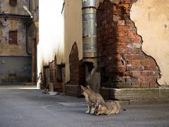 Street cats (pilot3ddd) Tags: stpetersburg yardofvasilievskyisland vasilievskyisland streetcats olympusomdem5markii olympusmzuiko1240mmf28pro