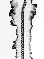 Tache - Task (Charlotte P.Denoel) Tags: contrast minimalism task tache blackandwhite noiretblanc bw nb abstrait abstract