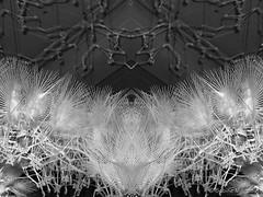 Federboa (Sockenhummel) Tags: olympus opernwerkstätten photographyplayground fuji x20 fujifilm finepix fujix20 playground olympics olympicsphotoplayground sw schwarzweis mono uni einfarbig monochrom blackwhite bw