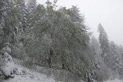 Neige 13 mai 2018 - Pilat (Fabio Aqualys Photographie) Tags: neige snow printemps hiver winter flocons ice glace paysage landscape pilat mai 2018