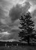 Cemetery and Rainstorm Along the Blue Ridge Parkway, Virginia (nsandin88) Tags: storm monotone canonlens blackandwhite bandw exploration sony canon grave explore clouds blueridgeparkway rural tree canonl rain virginia graveyard cemetery tombstone blueridge sonya7rii park nationalpark va a7rii nps