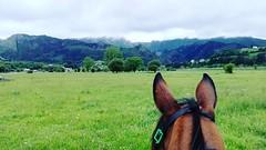 L`alisal #cuadraelalisal #caballos #horses #paseosacaballo #rutasacaballo #Asturias #ribadesella #endurance #endurancetraining #horseslovers