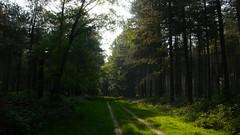 Promenade en forêt de Roumare (jeanlouisallix) Tags: rouen canteleu seine maritime haute normandie france forêt forest sylviculture sousbois chemins sentiers allées paysages nature écosysthème arbres landscape