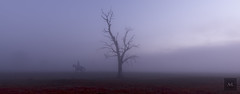 Gold Rush (Artistry & Love) Tags: mystical ethereal spiritual spirit magic heavenly celestial mysterious landscape nature fineart scene scenery view vista australia aus downunder dawn red fog horse stockman tree cold gold albury