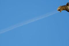 Gonville and Caius College (Sir Cam @camdiary) Tags: gonvilleandcaiuscollege gargoyle blue sky minimalism cambridge camdiary cambridgeuniversity
