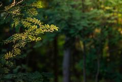 U nás v lese. (Robert Hájek) Tags: landscape nature forest sun sony sonya7ii czphoto czech