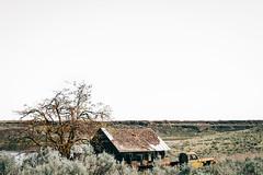 A Faithful Dog (Pedalhead'71) Tags: abandoned car desert douglascounty farmhouse homestead house prairie truck washington