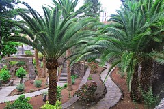 paths in the park :) (green_lover) Tags: park palms path garachico tenerife canaryislands spain trees travels