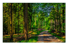 Ein Waldspaziergang (günter mengedoth) Tags: hd pentaxda 1685mm f3556 ed dc wr pentaxda1685mmf3556eddcwr wald weg fichten pentaxk3ii k3ii pk holz