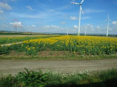 2017-07-21 10.06.19 (Kirayuzu) Tags: urlaub vacation reise travel sommer summer niederösterreich loweraustria österreich austria weinviertel zug zugfahrt landschaft landscape feld felder field fields natur nature sonnenblumen sunflowers