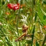 Locust photo hunting 3 thumbnail