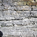 Sandstone (Middle Pennsylvanian; Frazeysburg Pit, Muskingum County, Ohio, USA) 5